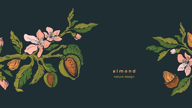 Gałąź migdałowca, orzechy, kwitnący kwiat, zielone liście. vintage ilustracja kwiatowy
