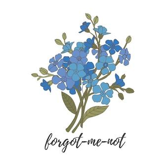 Gałąź niebieskich kwiatów niezapominajek na białym tle ilustracji wektorowych
