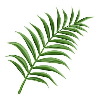 Gałąź palmy, na białym tle