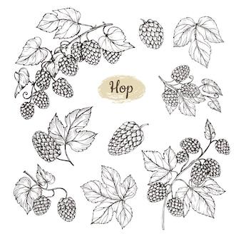 Gałąź rośliny chmielowej z liśćmi i kawałkiem chmielu w stylu grawerowania. elementy wiejskie wektor pub piwa