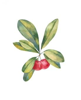 Gałąź z liści i jagod czereśniową ilustracyjną akwarelą na białym tle