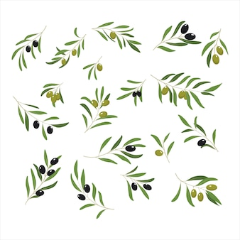 Gałązki oliwne.
