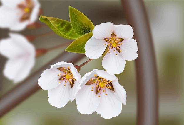 Gałązki wiśniowego kwiatu