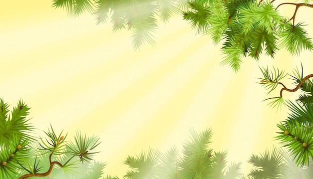 Gałęzie sosnowe. słoneczny poranek.