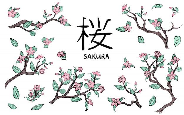 Gałęzie wiśni. różowe kwiaty sakury. zestaw ilustracji, biały.