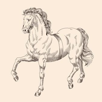 Galopujący koń z uprzężą na białym tle na beżowym tle.