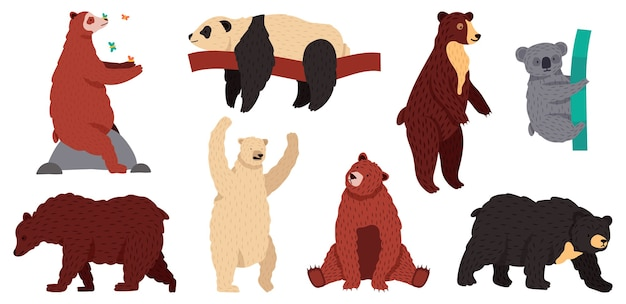 Gatunki niedźwiedzi. postacie dzikich ssaków, drapieżniki z futrzanych lasów, grizzly panda koala i zestaw ilustracji niedźwiedzia białego. koala i niedźwiedź, panda i grizzly, arktyczne białe zwierzę
