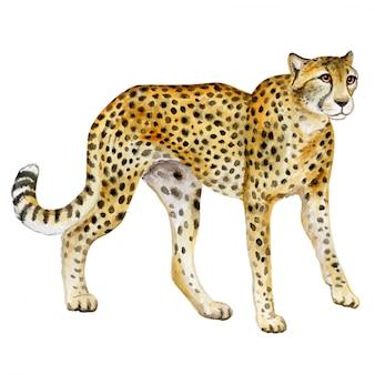 Gepard. akwarela dziki kot