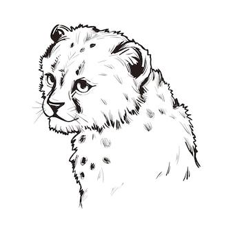 Gepard dziecko, portret na białym tle szkicu egzotycznych zwierząt. ręcznie rysowane ilustracji.