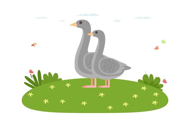 Gęś. ptaki domowe i zwierzęta gospodarskie. gęś ojciec i gęś matka stoją na trawniku. ptactwo wodne z rodziny kaczek, kolejność anseriformes. ilustracja wektorowa w stylu cartoon płaski.