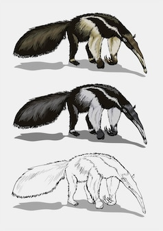 Gigantyczny mrówkojad w kolorze i czerni i bieli