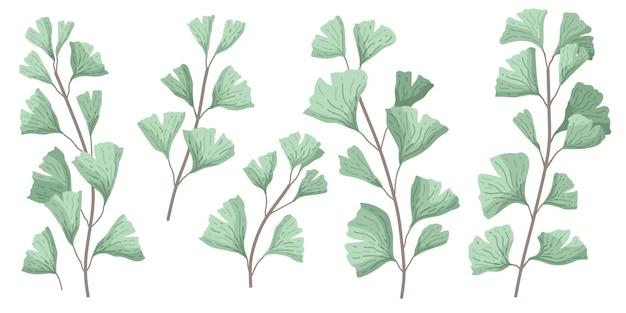 Ginkgo biloba znany jako liście miłorzębu japońskiego lub miłorzębu japońskiego