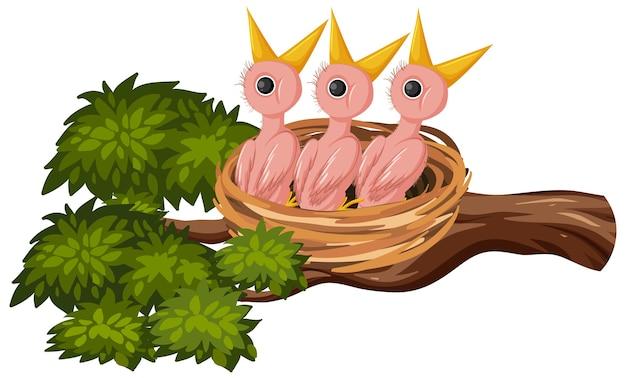 Głodne pisklęta na gnieździe