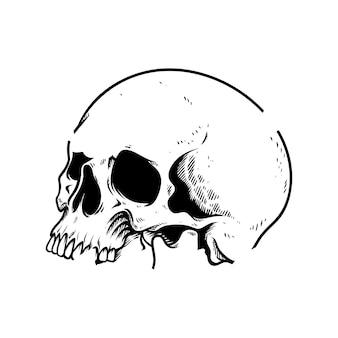 Głowa czaszki, rysunek dłoni, na białym tle