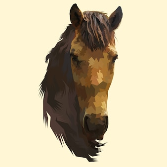 Głowa konia na białym tle