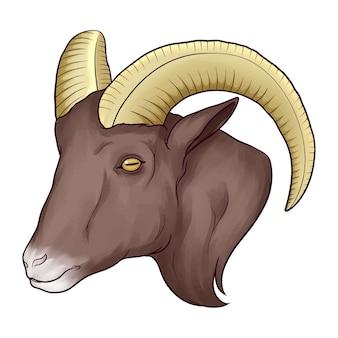 Głowa kozy na białym tle