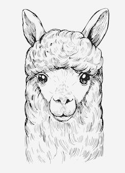 Głowa lamy. ręcznie rysowane ilustracja na białym tle