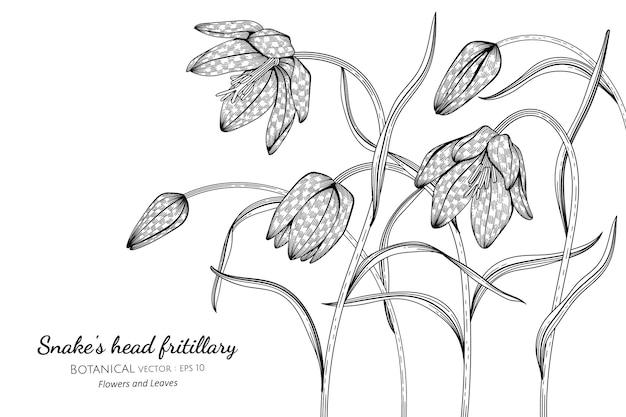 Głowa węża fritillary kwiat i liść ręcznie rysowane ilustracja botaniczna z grafiką liniową na białym tle.