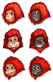 Głowy szympansów