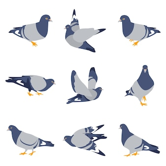 Gołębie ptaki kreskówka zestaw na białym tle