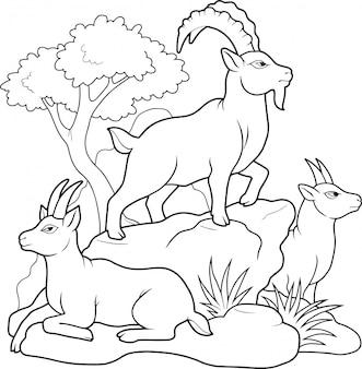 Górskie kozy