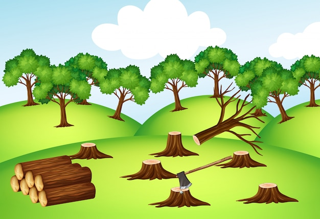 Góry z posiekanymi drzewami