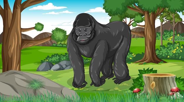 Goryl w lesie lub w lesie deszczowym z wieloma drzewami