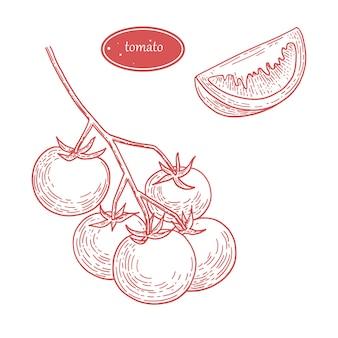 Grafika grawerowania ilustracji pomidorów