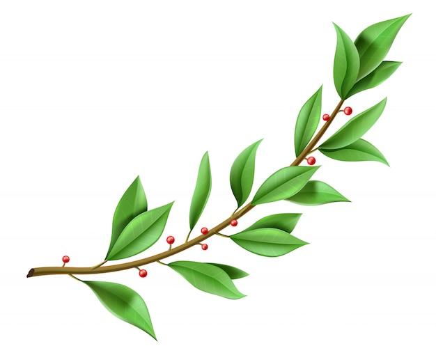Grafika wektorowa. drzewo gałązka wieniec laurowy zielone liście.