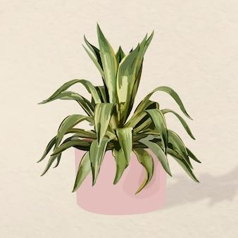 Grafika wektorowa roślin, ilustracja agawy