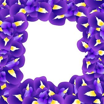 Granica kwiat purpurowy tęczówki