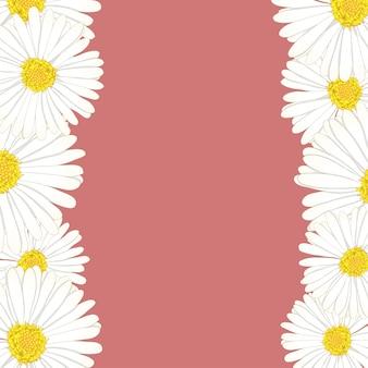 Granica kwiatowa stokrotka