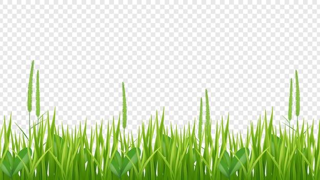 Granica zielona trawa. realistyczne pole lub łąka na przezroczystym tle. tło roślin.