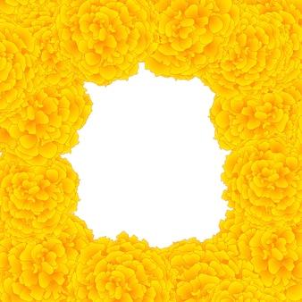 Granica żółta nagietka
