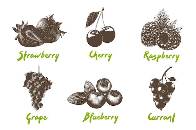 Grawerowana kolekcja jagód organicznych