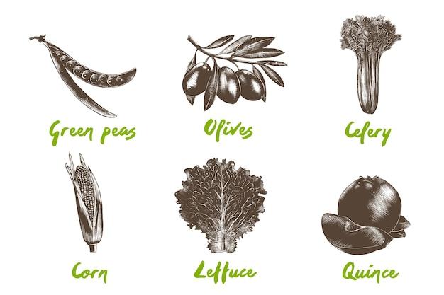 Grawerowana kolekcja organicznych warzyw w stylu. ręcznie rysowane kolorowe szkice na białym tle