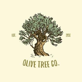 Grawerowane lub ręcznie rysowane logo drzewa oliwnego, stary wyglądający emblemat dla ekologii, kempingu lub marki żywności