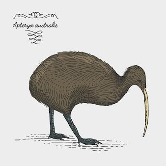 Grawerowane, ręcznie rysowane ilustracja w stylu drzeworyt scratchboard, vintage rysunek gatunków.