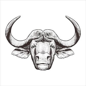 Grawerowanie głowa buffalo ilustracji