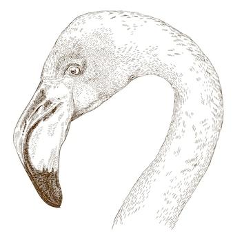 Grawerowanie ilustracja głowy flaminga