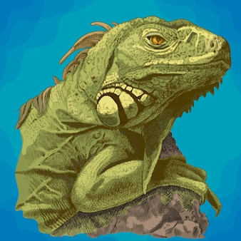 Grawerowanie ilustracja głowy iguany