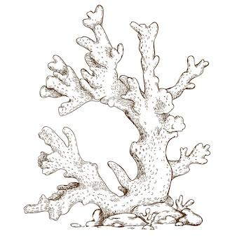 Grawerowanie ilustracja koralowca