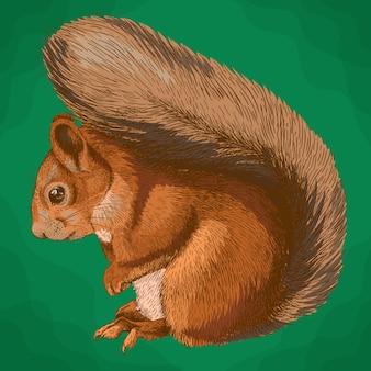 Grawerowanie ilustracja wiewiórki