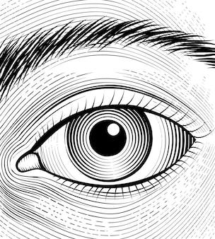 Grawerowanie ludzkiego oka. szkic zbliżenie oczu na białym tle.