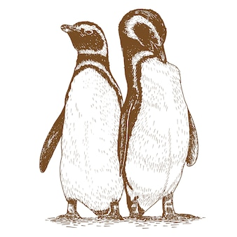 Grawerowanie pengiun rysunek zwierząt ilustracji