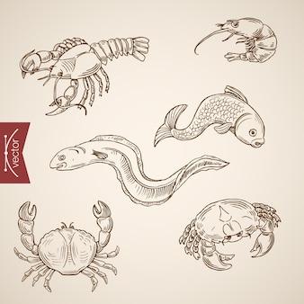 Grawerowanie rocznika ręcznie rysowane kolekcji życia morskiego.