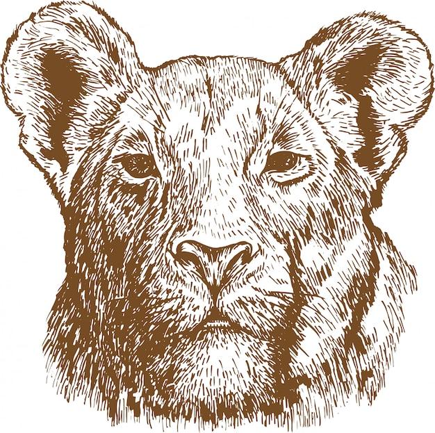 Grawerowanie rysunek głowy lwa