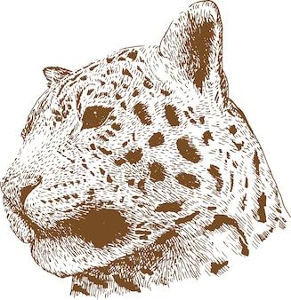 Grawerowanie rysunek ilustracja głowy lamparta