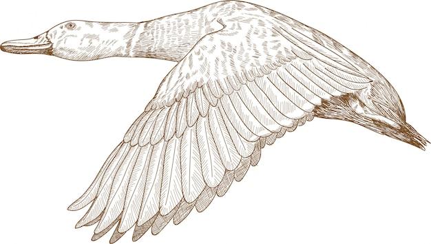Grawerowanie rysunek ilustracja latającego krzyżówki