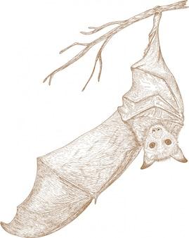 Grawerowanie rysunek ilustracja nietoperza zwierząt